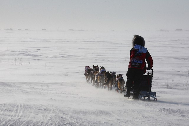Aliy Zirkle, perpetual Iditarod runner-up.