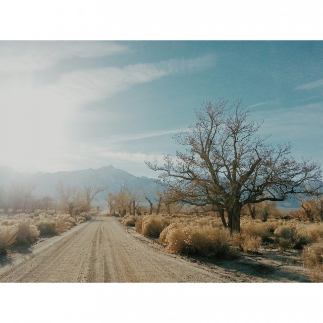 photo no 10 -- Manzanar