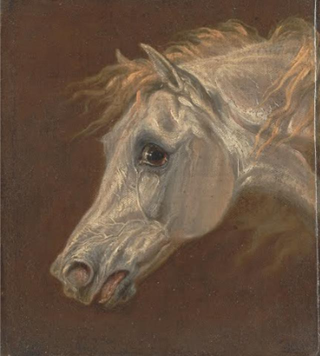 Martin Theodore Ward--Head of a Grey Arabian Horse